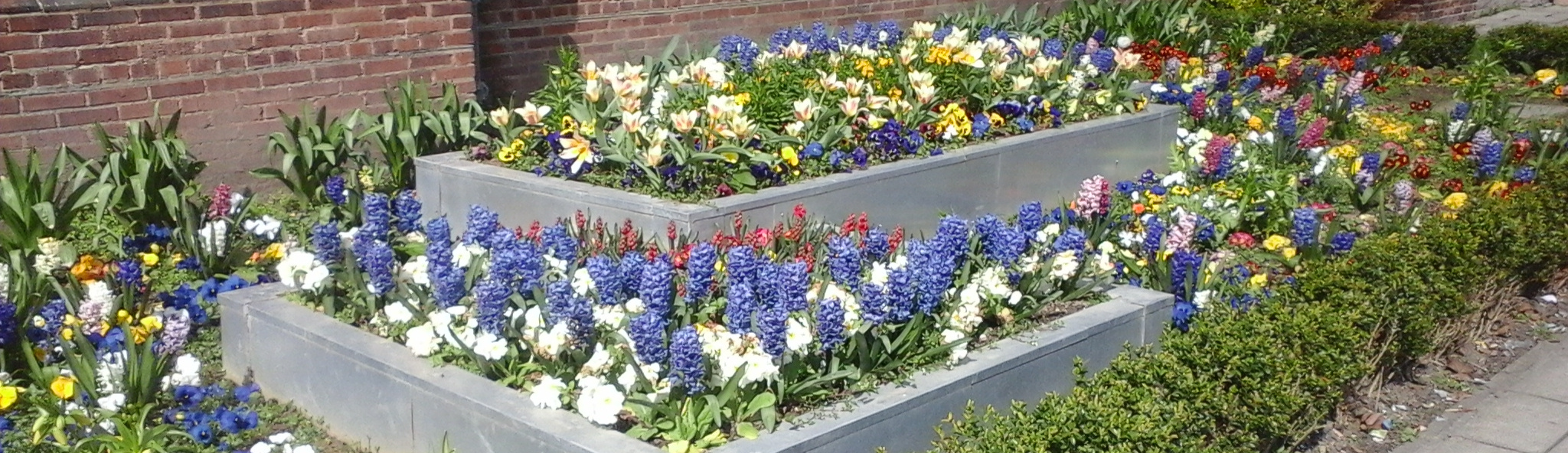 A nice flowerbed at university last year :D