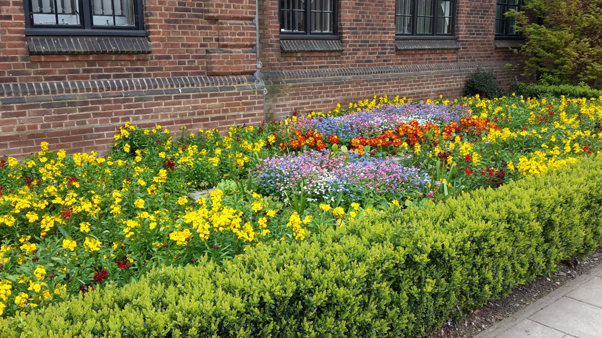 Some lovely flowers at University last year.